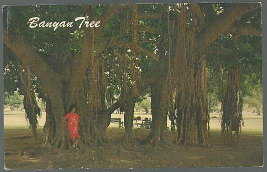 POSTCARD OF BANYAN TREE, HONOLULU, HAWAII, Postcard