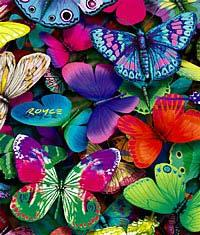 THE RAINBOW BUTTERFLY 1