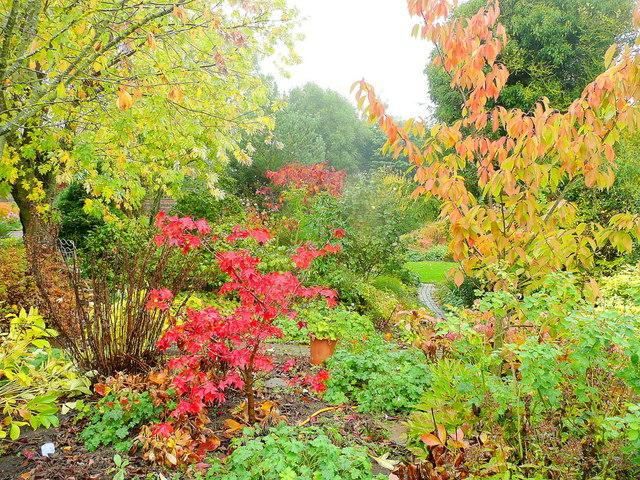 Magnificent autumn colours in the garden