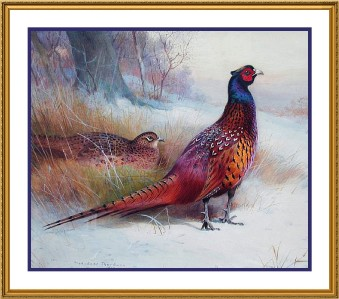 Archibald Thorburns Old English Pheasant Counted Cross Stitch Chart