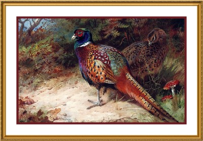 Archibald Thorburns Illustration of Common Pheasant Counted Cross