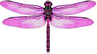 10 x 3D PINK Dragonfly Nursery Baby Girls Room Gift