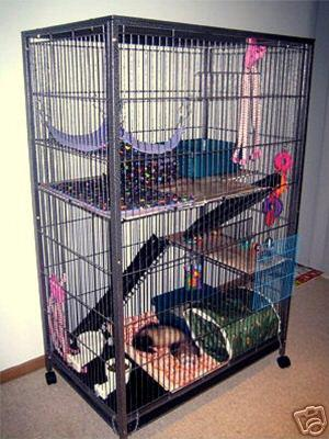 Cheap bird cages online dating 10