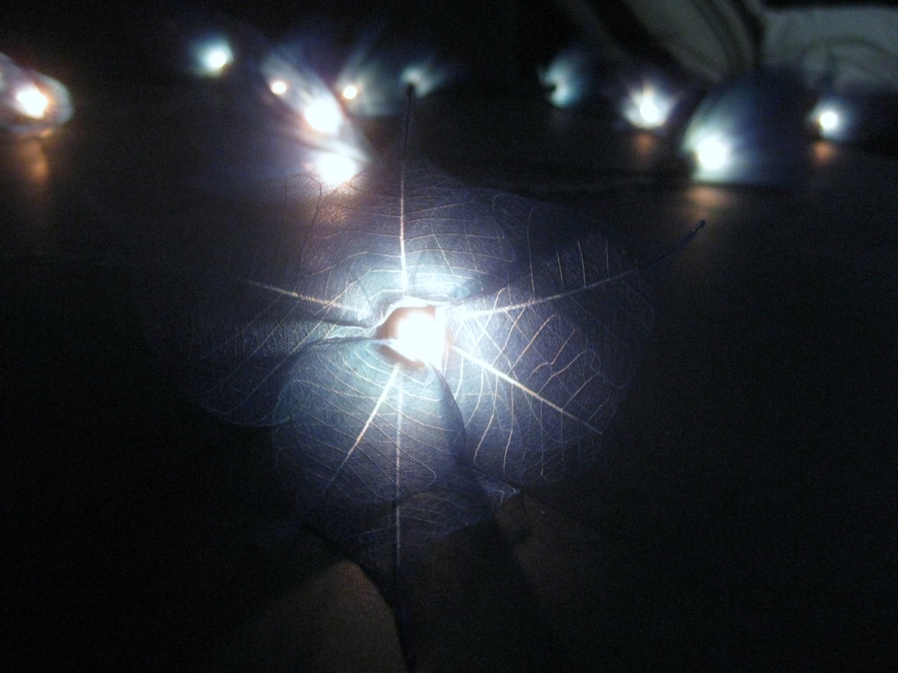 Blue Star String Lights : 20 BLUE Star Flower BATTERY Powered LED String Fairy Lights Lanterns Party Gift eBay