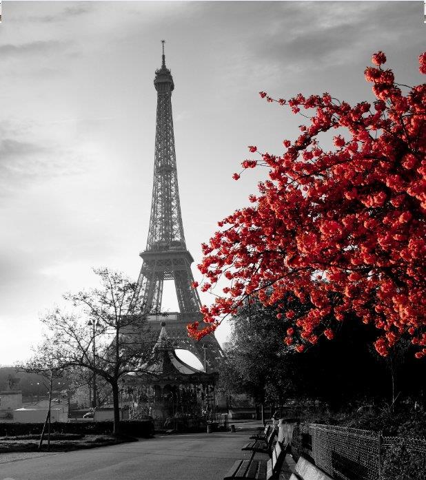Cortinas De Baño Quality:Detalles de Paris Torre Eiffel Con Rojo Bush Baño Cortina de ducha de