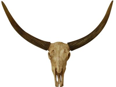 Large Wall Hanging Skull With Antlers 68X34X35CMS Wall