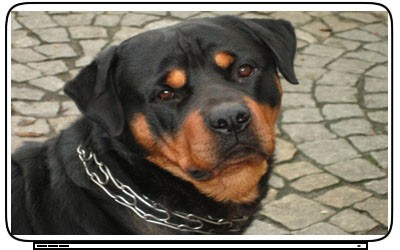 Dogs Rottweiler Laptop Netbook Skin Decal Cover Sticker