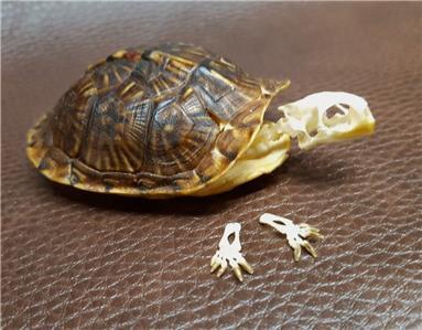 red turtle-红海龟|电影红龟剧情介绍|红海龟 电影|红