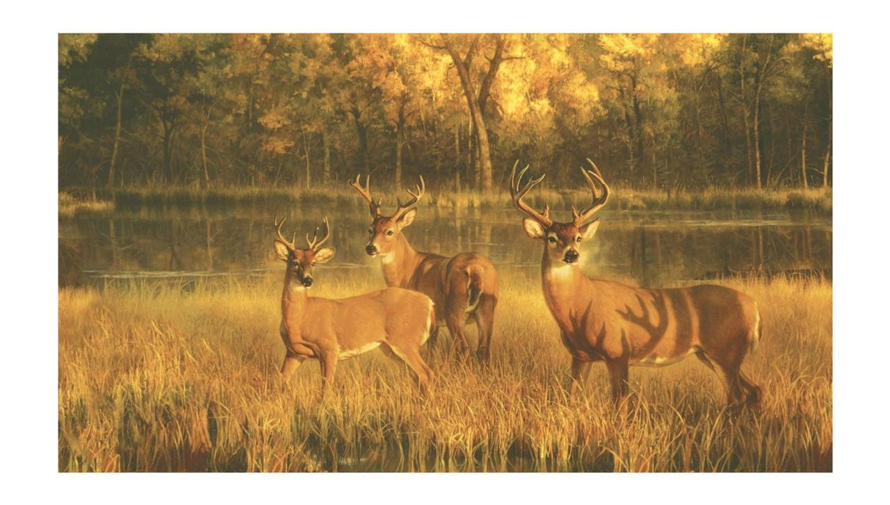 New 15 39 x 9 39 white tail deer prepasted wallpaper mural for Deer wallpaper mural