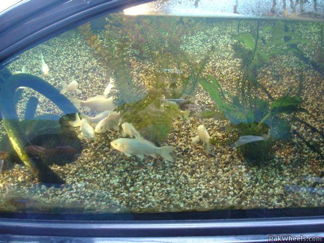 Ford ka aquarium fish tank perfect display for a car for How to reseal a fish tank