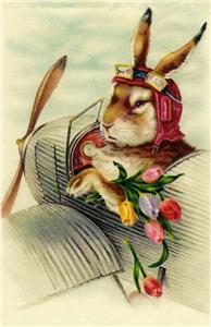 rabbit plane