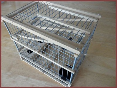 Finch Trap Cage http://www.ebay.com/itm/Imported-from-Spain-Hand-Made-Wood-Trap-BIRD-CAGE-Recovery-Finch-Size-/320937168801