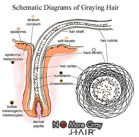 How to get natural hair color back from grey