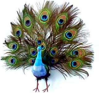 16 feather artificial fake decorative craft peacock birds for Synthetic feathers for crafts