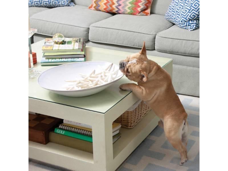 Pawz Away Dog Cat Pet Mini Pet Barrier Instant Indoor