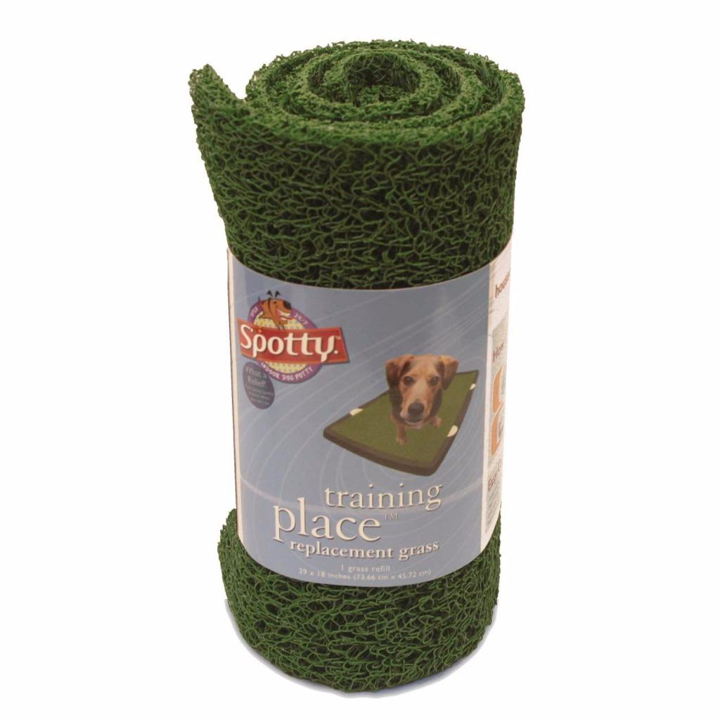 Dog Potty Training Grass