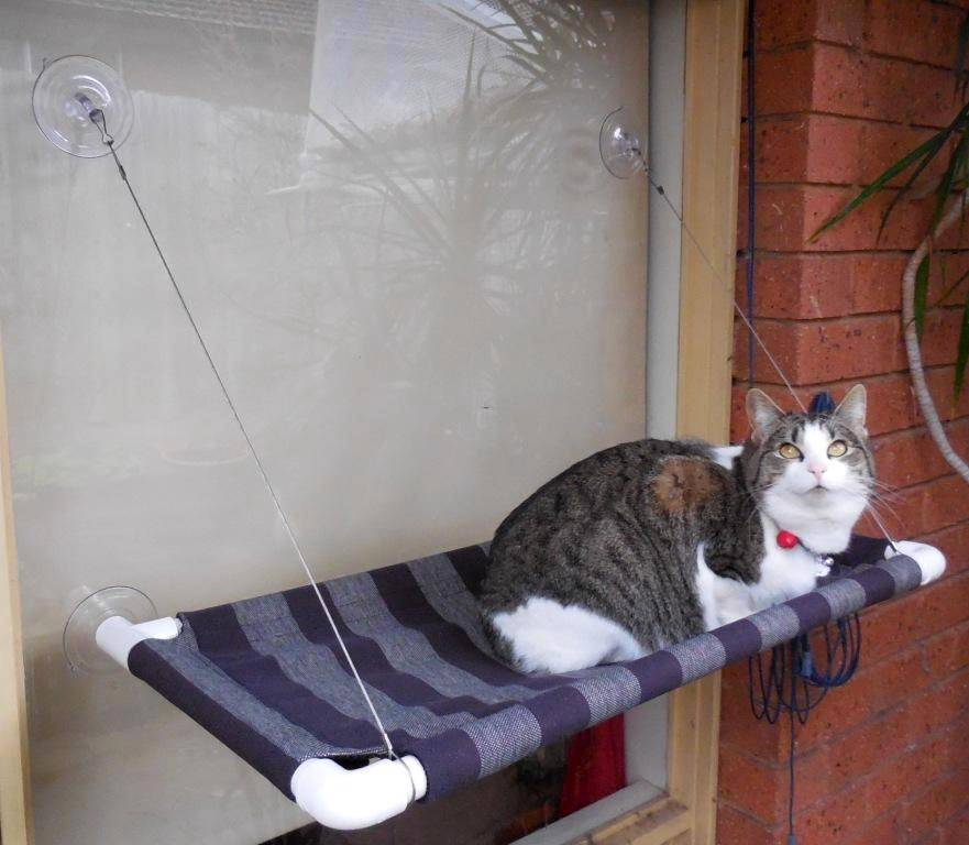 Http Www Ebay Com Au Itm Paws Outdoors Petite Animal Window Seat For Cats Aubergine Cat Bed 131006984607