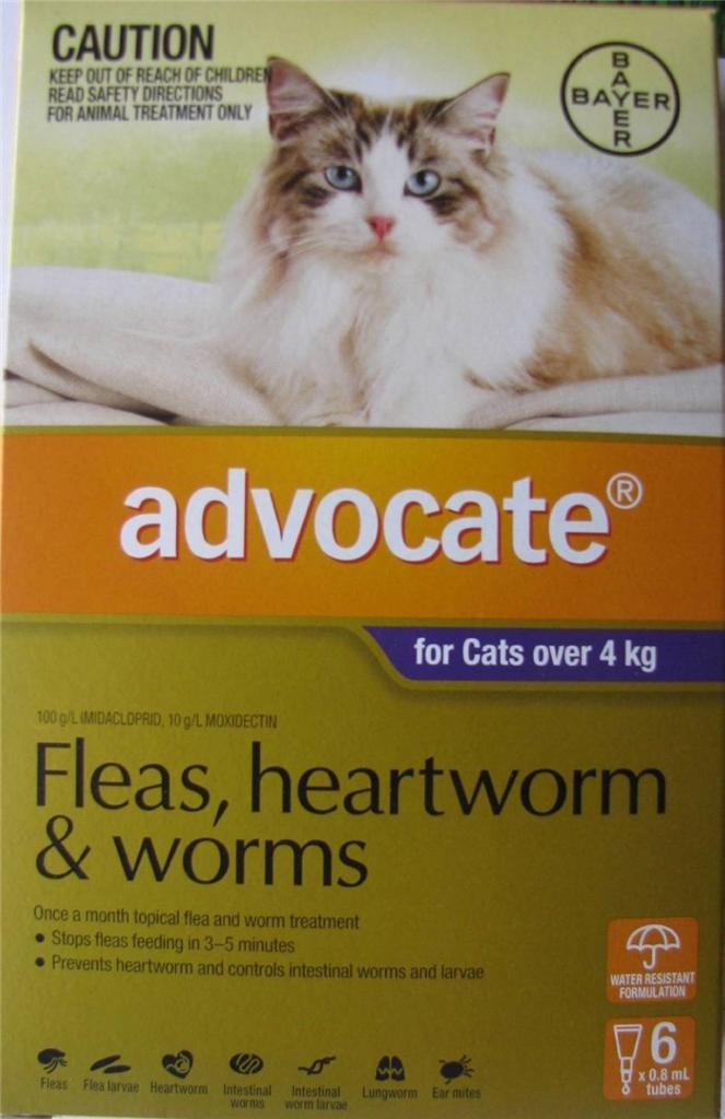 Kitten flea treatment walmart