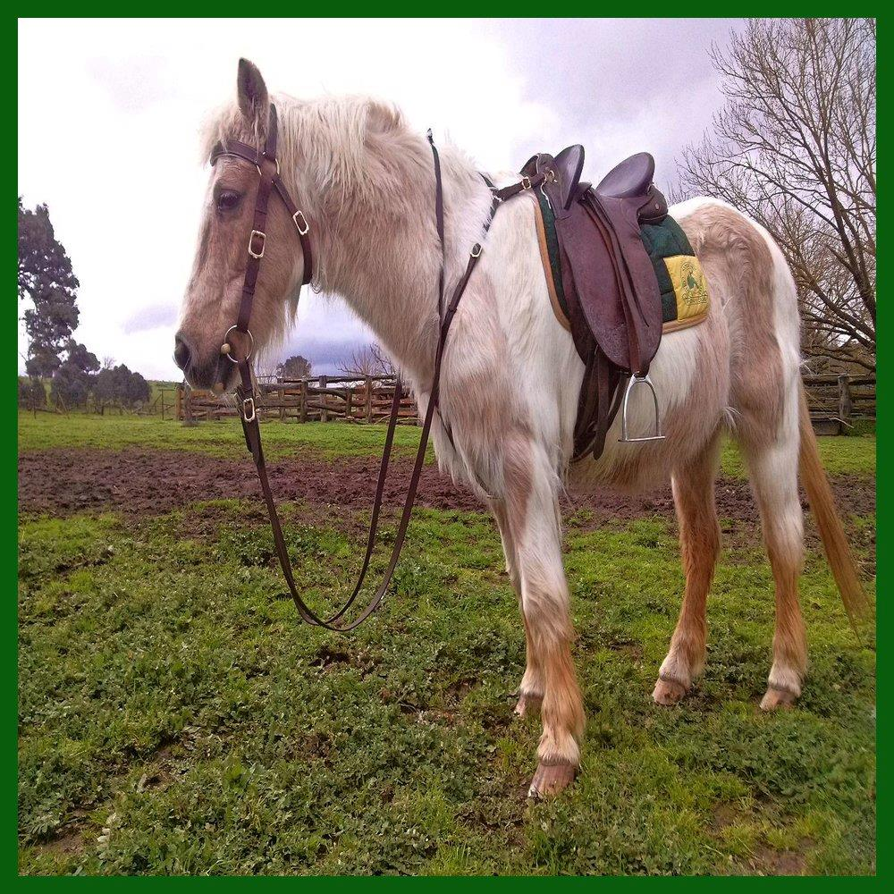 LOVE MY HORSE Australi...
