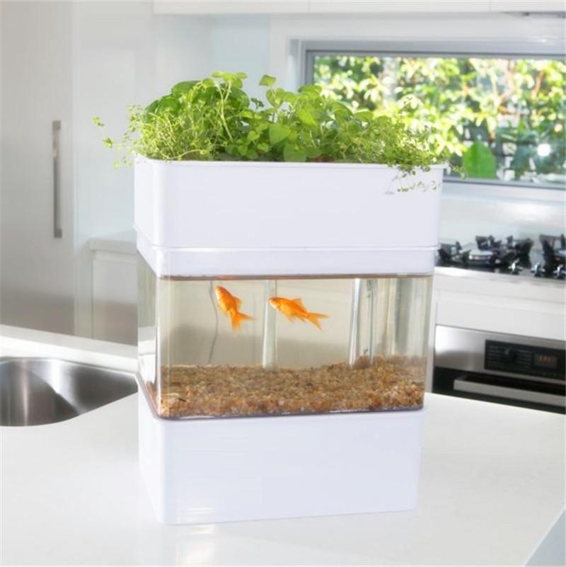 New indoor aquaponics system fish bowl jar water for Indoor fish farming