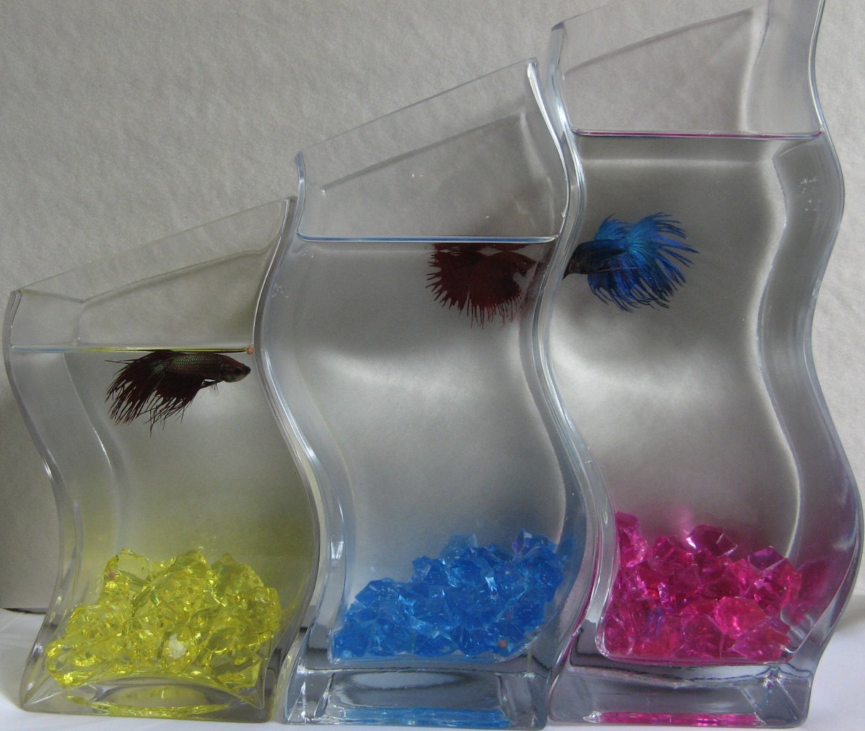 diy betta aquarium joy studio design gallery best design