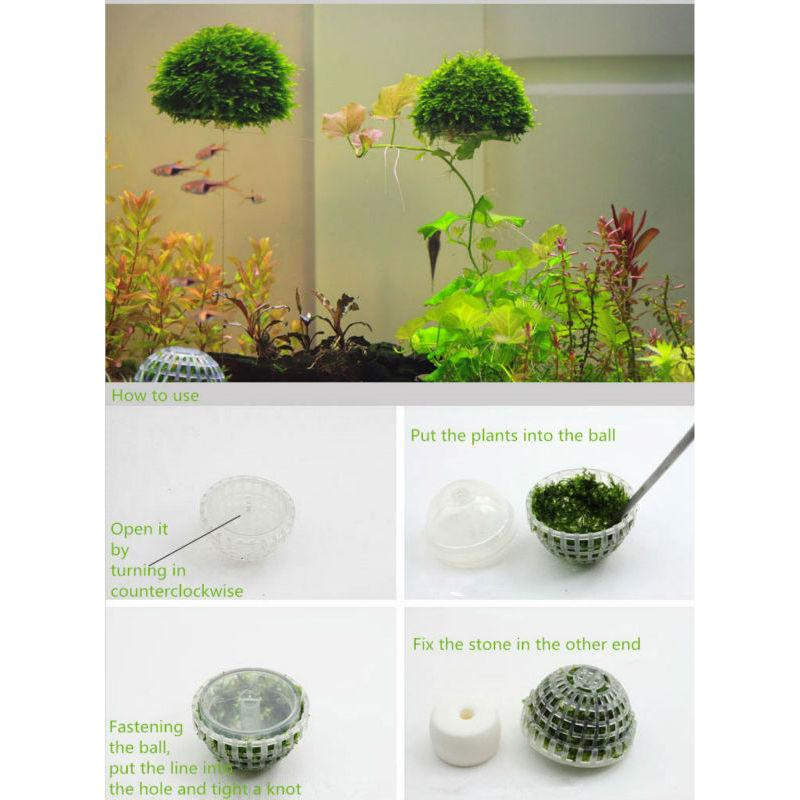 FRESHWATER FLOATING PLANTS MOSS HOLDER PLANTED AQUARIUM ...