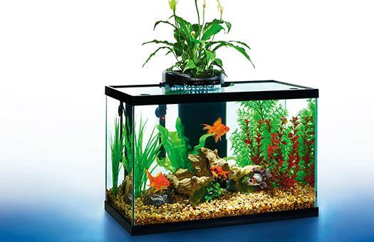 Elive aquaduo 10 gallon led aquarium kit glass fish tank for 10 gallon fish tank cover