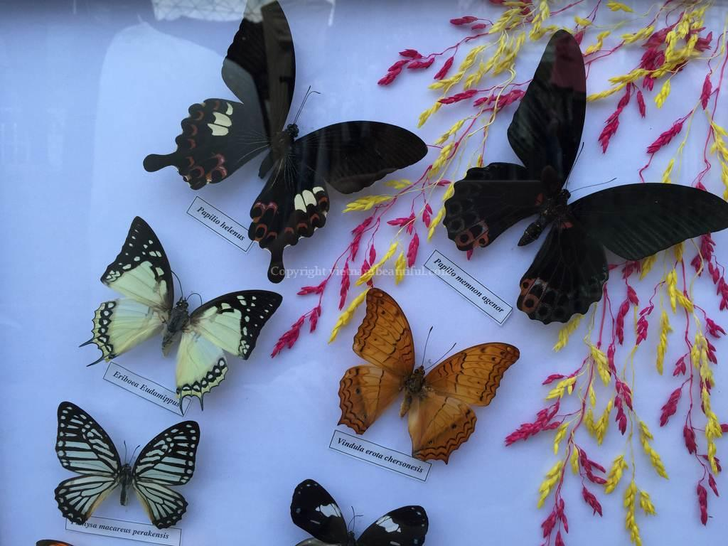 Real 15 Butterfly Garden Plans Display Taxidermy Insect