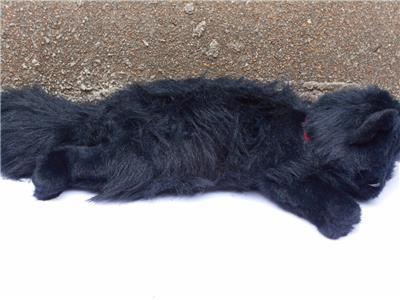 18 ty vintage 1987 classic licorice black cat stuffed animal plush toy ebay. Black Bedroom Furniture Sets. Home Design Ideas