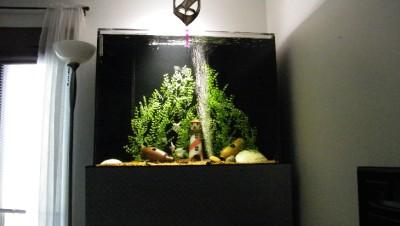 1 Fish Tank Aquarium Plastic Decoration Plant 29 30 Inches Tall Ebay