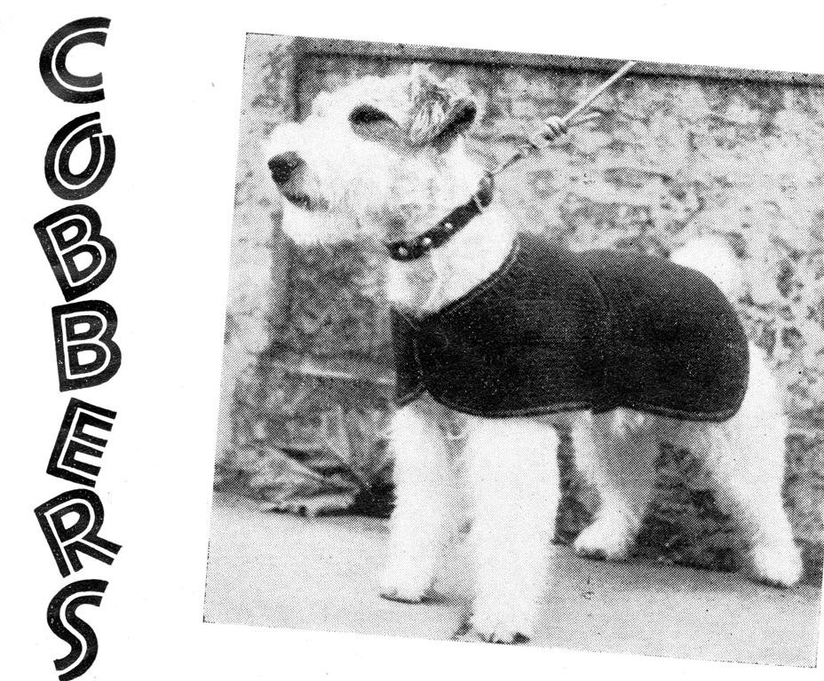Knitting Pattern Dog Jacket : DOG Coat Medium DOG Coat Knitting Pattern eBay