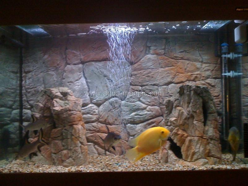 Juwel rio 3d thin beige aquarium backgrounds for fish tank for What do you need for a fish tank