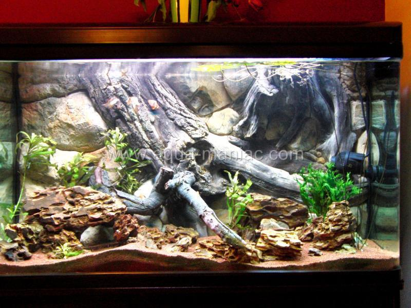 Aquarium fish tank backgrounds 3d amazon high quality many for Amazon fish tanks