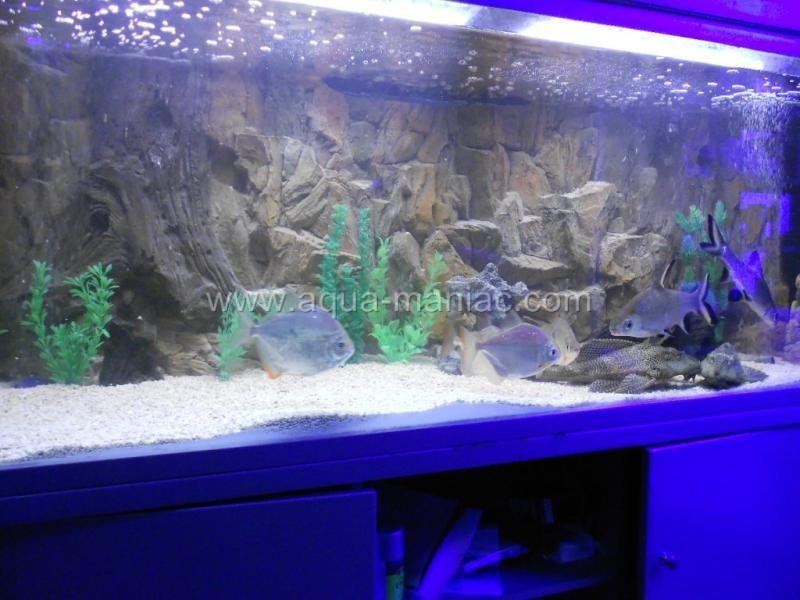 Aquarium background decoration ornament for fish tank 3d for Aquarium background decoration