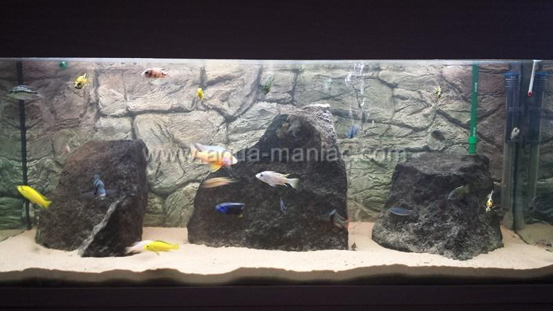 Aquarium grey thin background ornament for fish tank size for Thin fish tank