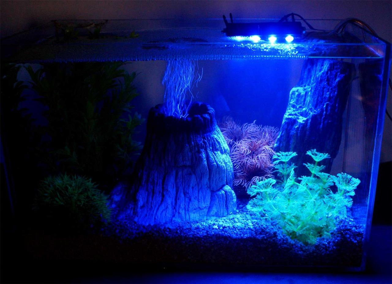 Freshwater aquarium fish uk - We Do Any Size Of 3d Backgrounds To Fit Your Aquarium Or Vivarium You Can Get Quote Online In 3 Seconds Message Us For Details
