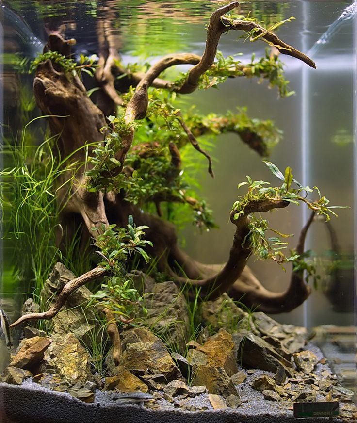 Red moor aquarium natural wood root driftwood bogwood for Aquarium wood decoration