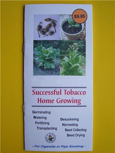 How-to-grow-tobacco-plants-from-seeds-4-rolling-cigarettes-Free-Shipping