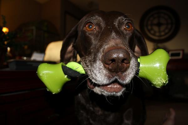 Testimonial Photo Of Cocoa With Indestructible Dog Rope Tug Toy