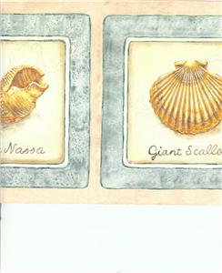 peach sea shells scroll - photo #37