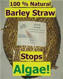 how to use barley straw in ponds
