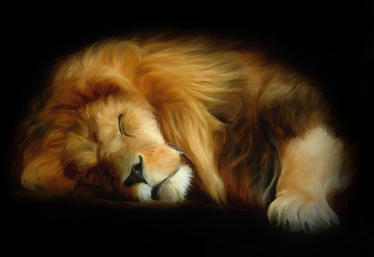 Lion-Tiger-Leopard-Large-10-x-8-Inch-Size-Canvas-Painting-Style-Picture-Print