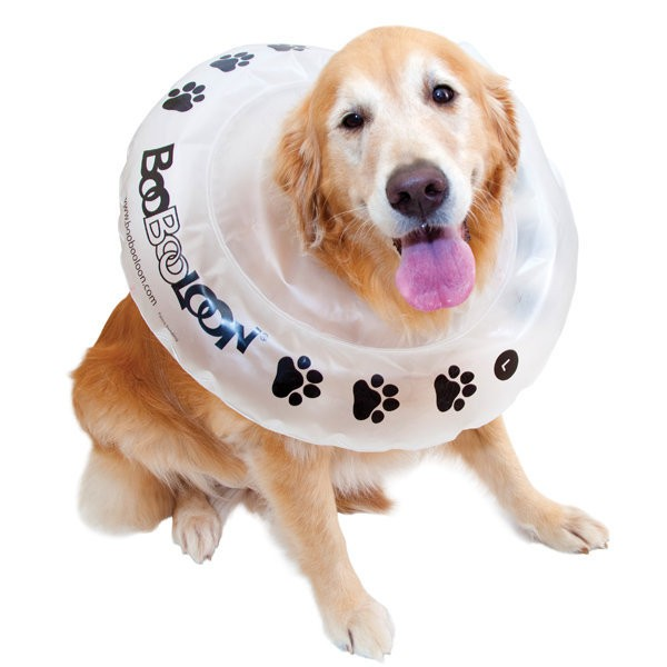 Dog Cone Sale