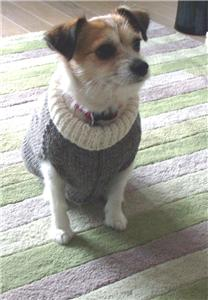 Knitting Pattern Dog Coat Pug : Dog coat knitting pattern. fits Pug dog. eBay
