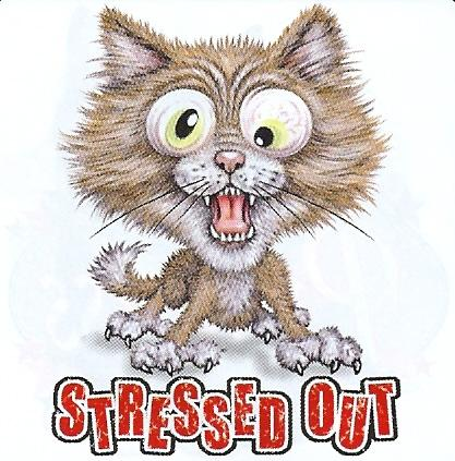 Stressed out Cat - Funny/Humorous Animal T Shirt | eBay