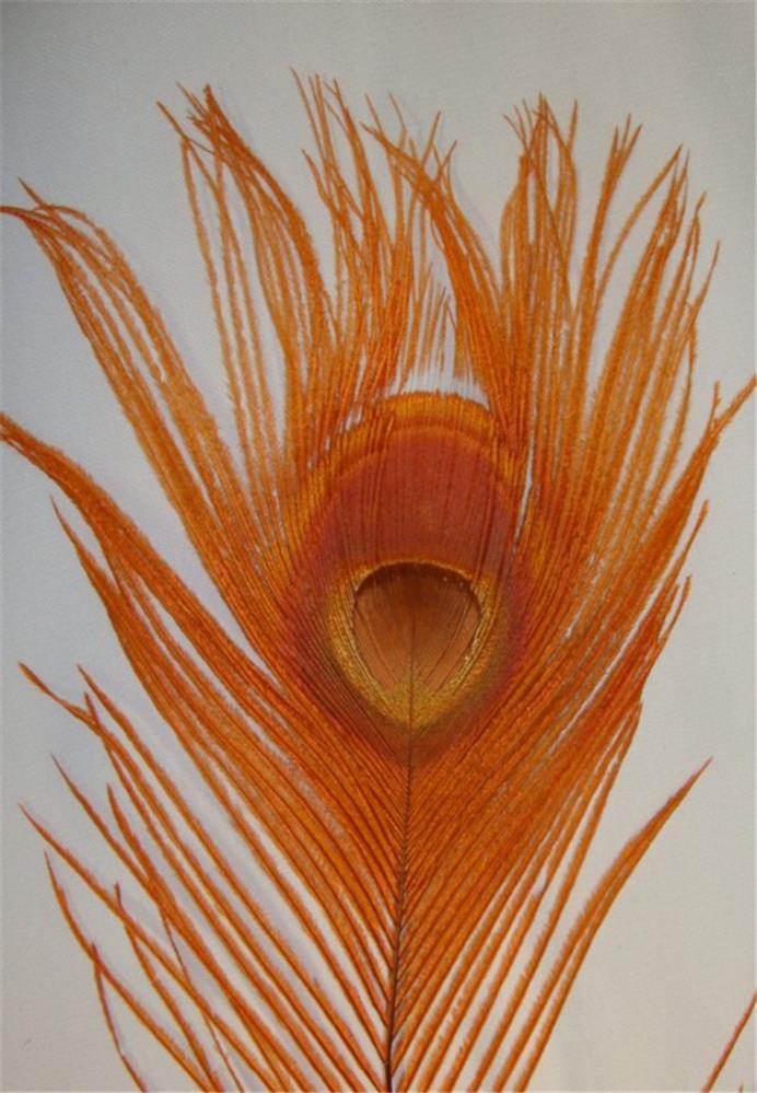 Orange peacock feathers