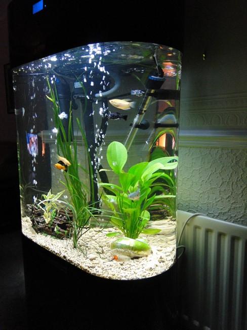 Column aquarium acrylic fish tank oval shaped 230l new ebay for Column fish tank