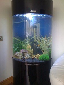 Details about Column Cylinder Aquarium Acrylic Fish Tank 260L New