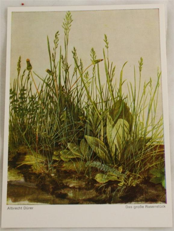 vintage postcard, art, Albrecht Durer, grasses, leaves