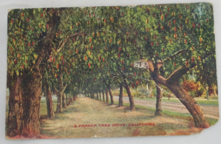 vintage postcard, Southern California, Pepper Tree Lane,CA, Hand colored, hand coloured